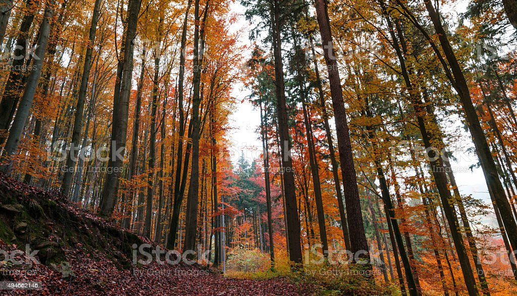 Autumn trees in a beautiful Central European forest stock photo