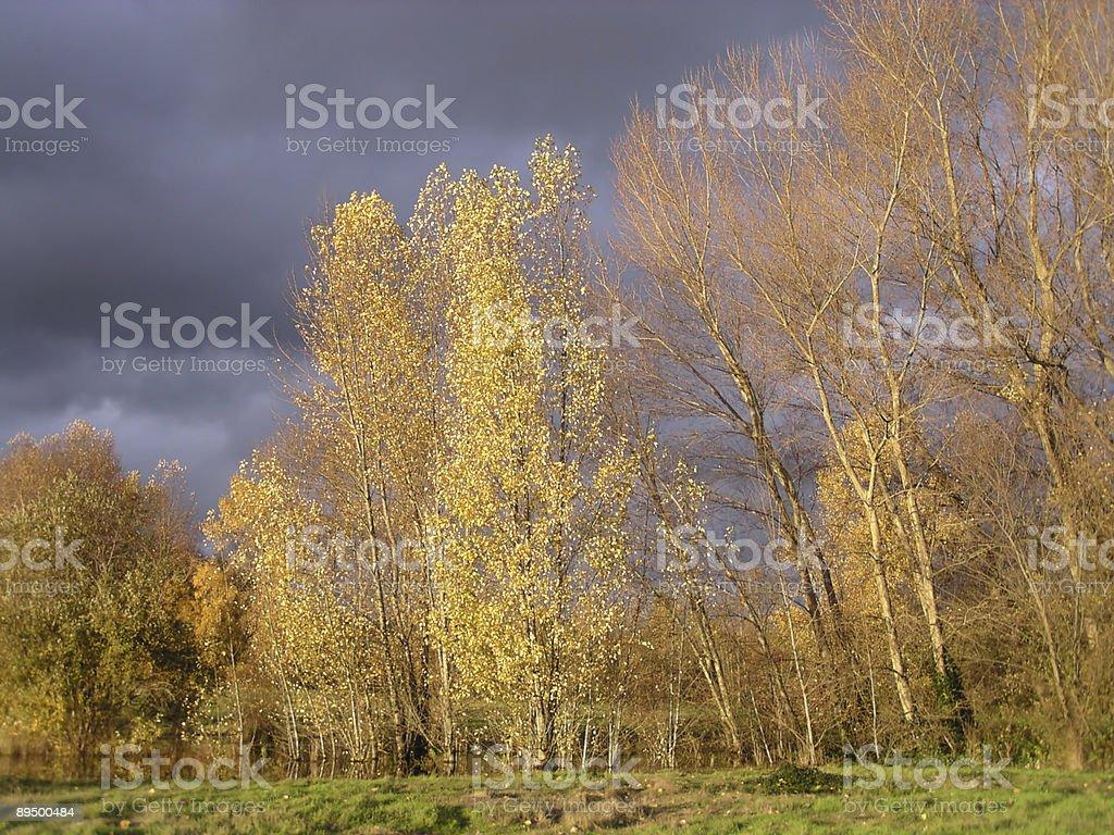 Autumn Trees in Evening Light stock photo