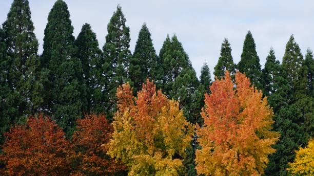 Autumn Trees in Portland Oregon stock photo