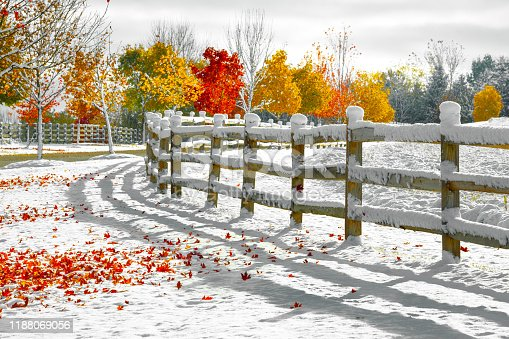 Autumn trees in snow with classic wooden fence, stunning red, orange and yellow trees ablaze with fall colors
