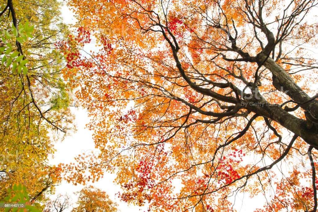 Autumn Trees in the Forest royalty-free stock photo