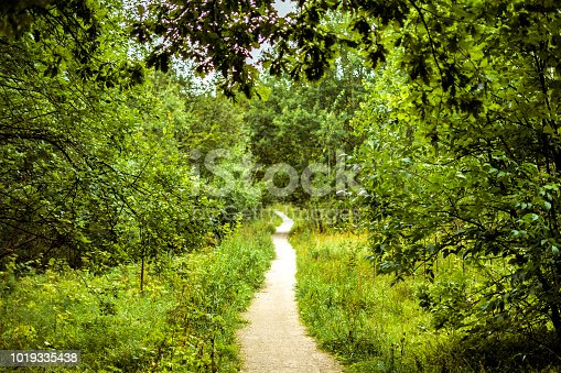 istock autumn trees in the forest with yellow fallen leaves concept 1019335438