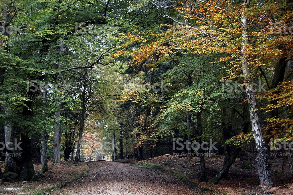 Autumn Trees in the New Forest stock photo