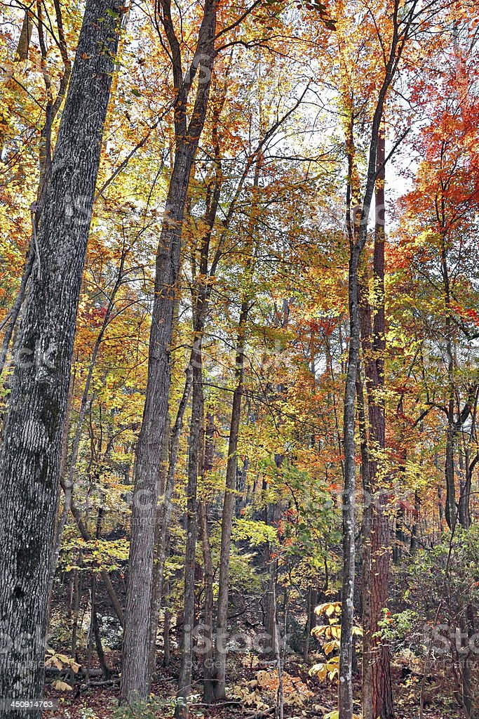 Autumn trees, Kings Mountain National Park, South Carolina stock photo