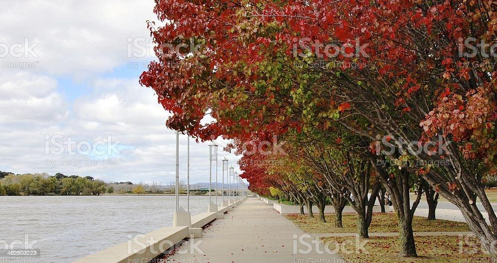 Autumn Trees, Lake Burley Griffin stock photo