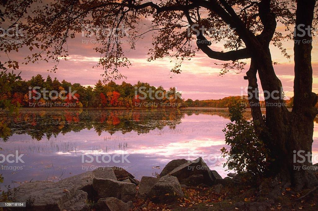Autumn Trees Lining Lake at Dusk royalty-free stock photo