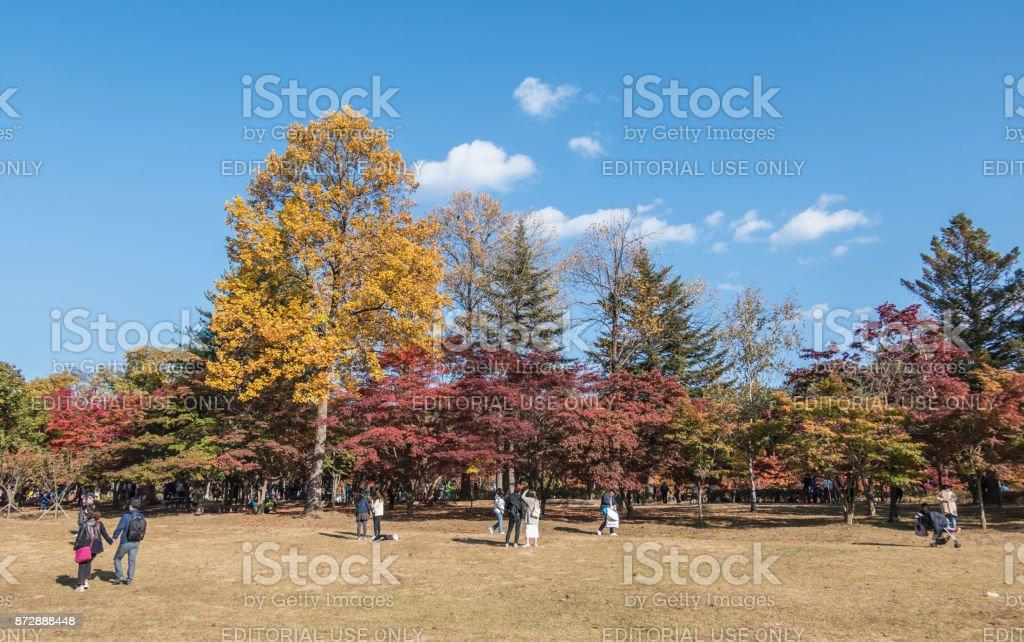 Autumn trees on Nami Island in South Korea stock photo