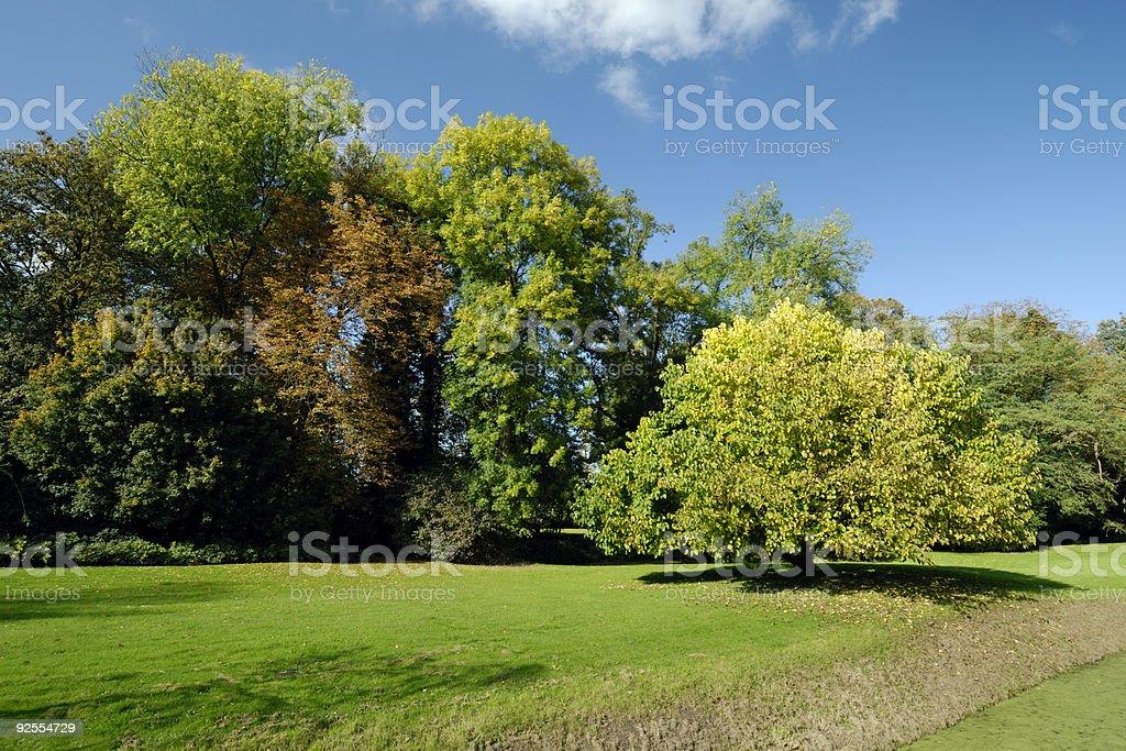 Autumn trees royalty-free stock photo