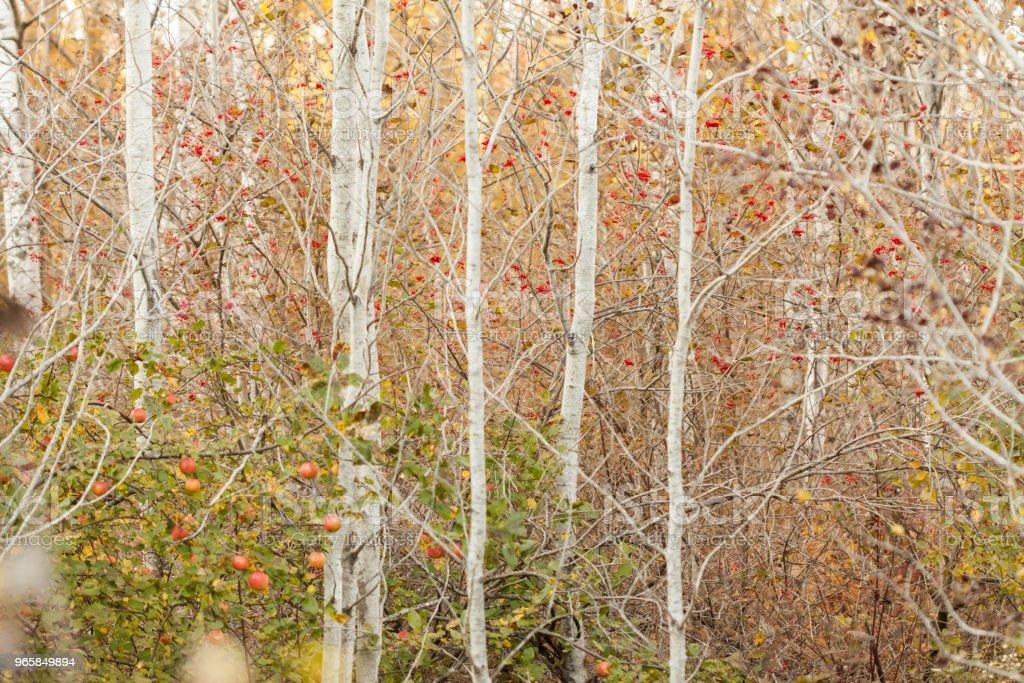 Höstträd - Royaltyfri Amerikansk nationalpark Bildbanksbilder