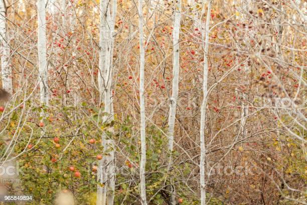 Höstträd-foton och fler bilder på Amerikansk nationalpark