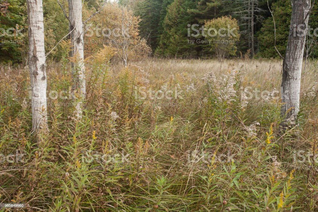 Autumn Trees - Royalty-free Agricultural Field Stock Photo