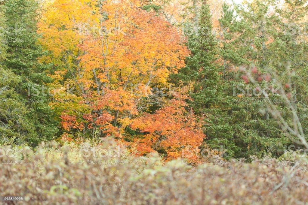 Herfst bomen - Royalty-free Boom Stockfoto