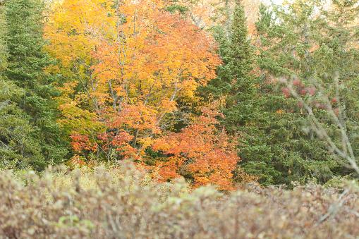 Herfst Bomen Stockfoto en meer beelden van Boom