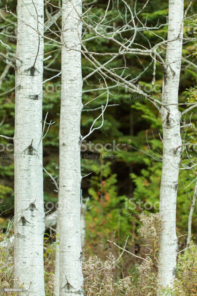 Autumn Trees - Royalty-free Autumn Stock Photo