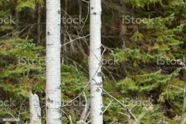 Autumn Trees - Fotografias de stock e mais imagens de Ao Ar Livre