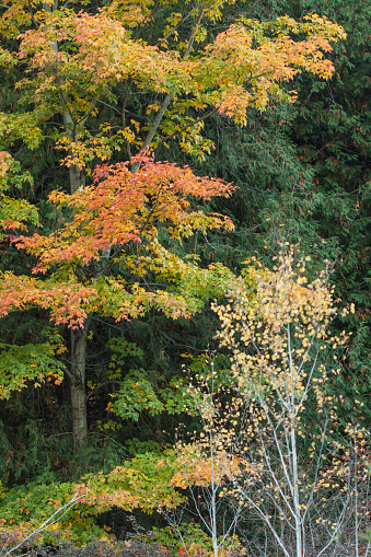 Autumn Trees Stock Photo - Download Image Now