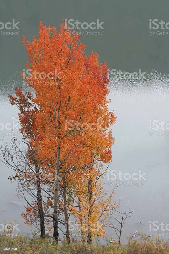 Alberi in autunno foto stock royalty-free