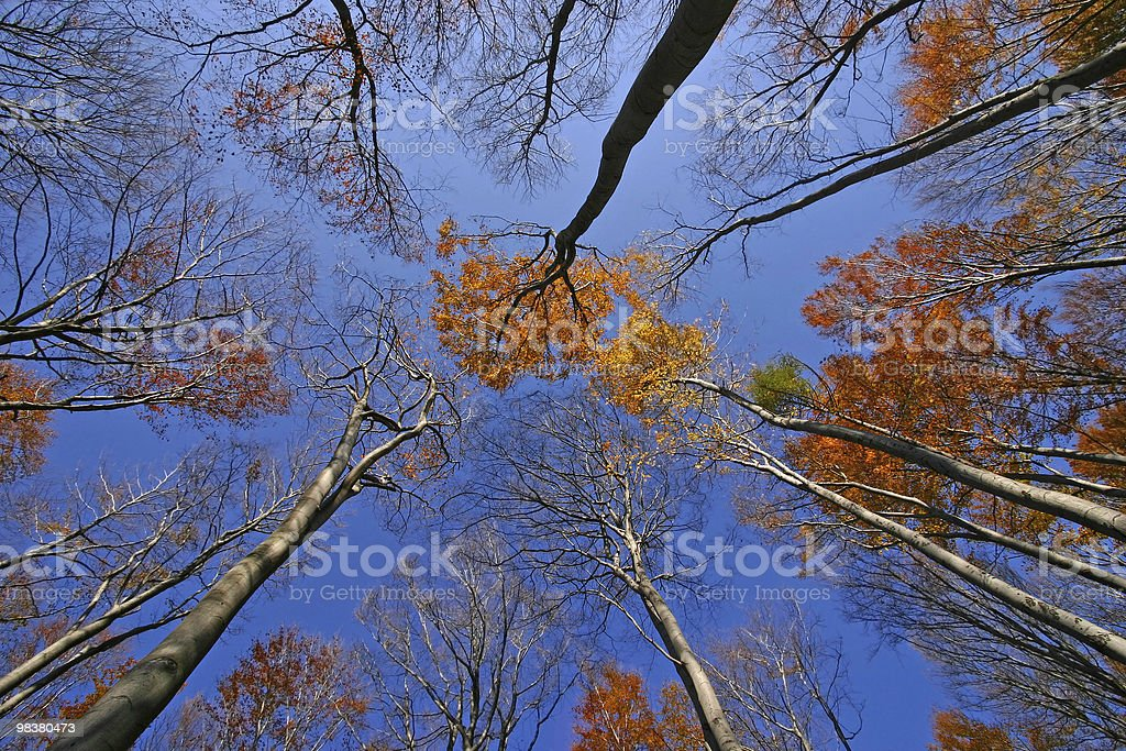 autumn trees royalty-free stock photo