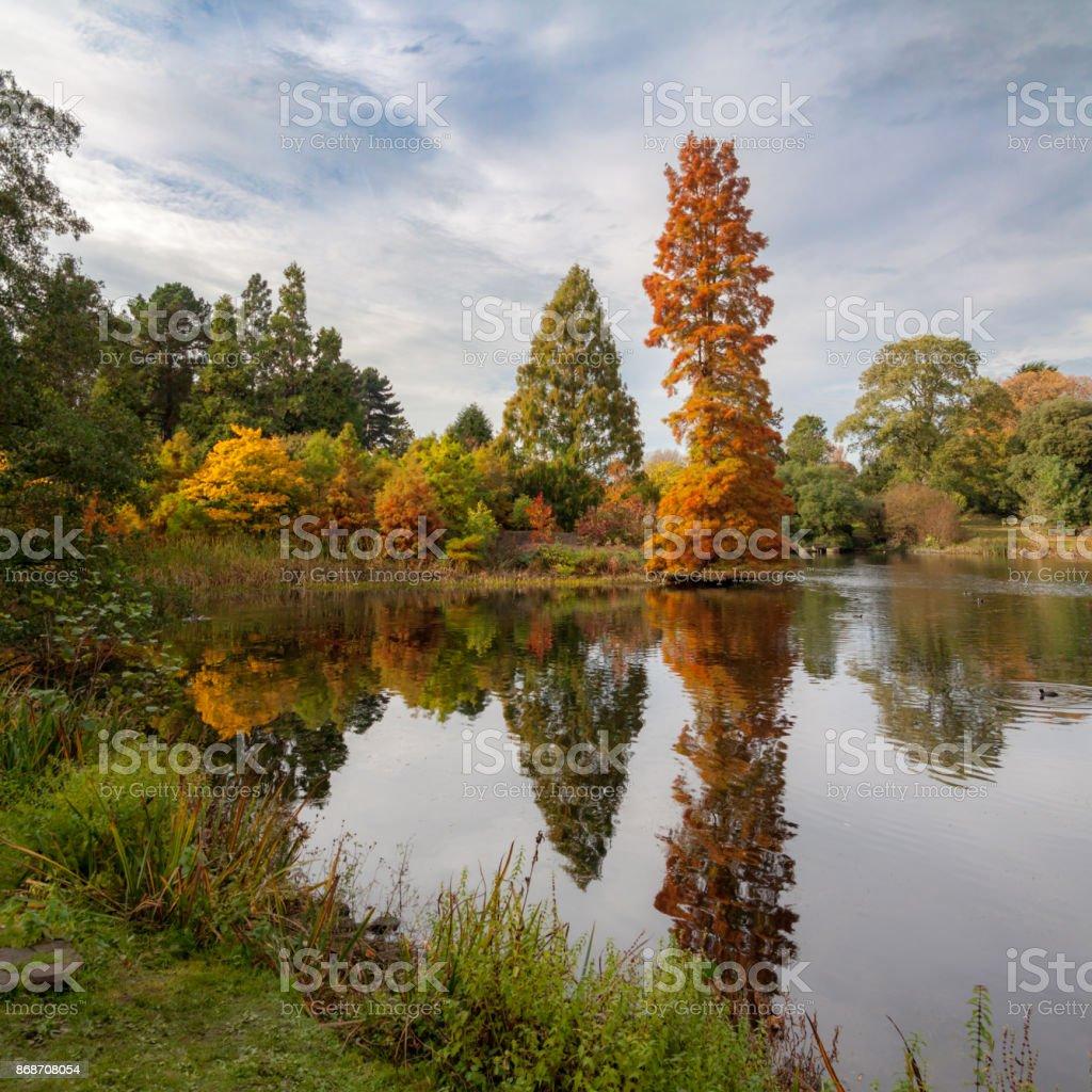 Autumn trees reflecting on pond stock photo