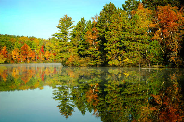 Autumn trees reflection on lakeshore clear lake beautiful fall colors with reflection in the lake minnesota stock pictures, royalty-free photos & images