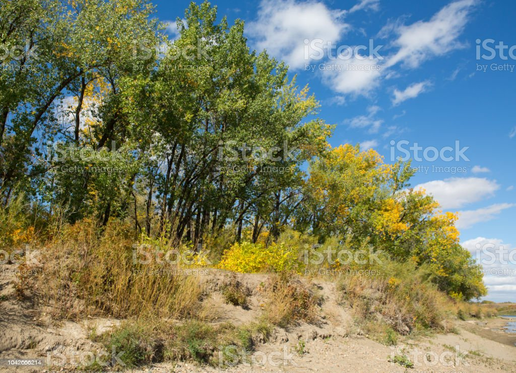 Autumn trees South Saskatchewan River bank stock photo