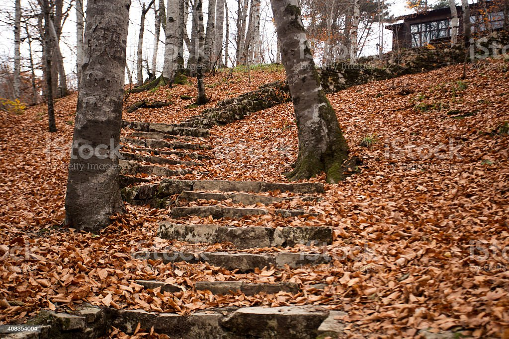autumn, trees, stairs and leaves The Yedigöller National Park royalty-free stock photo