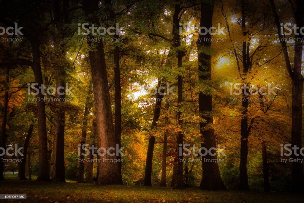 Autumn trees with colorful leaves and sunlight stock photo