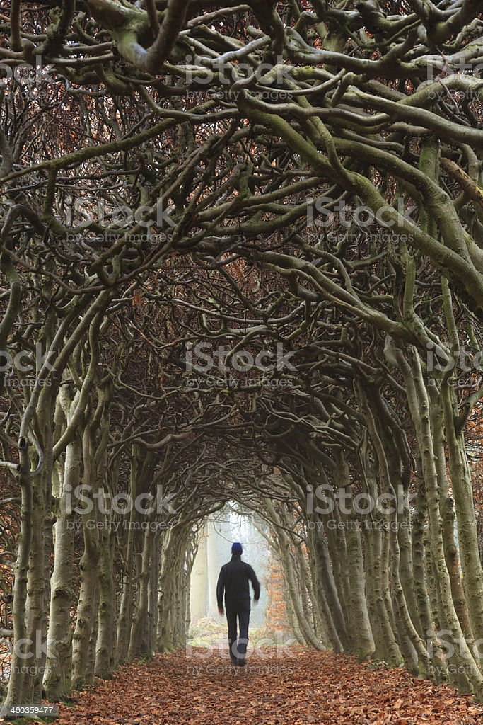 Autumn tunnel stock photo