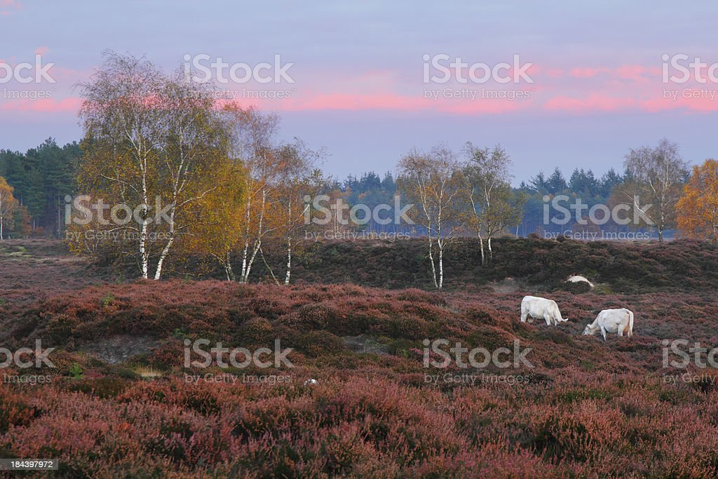 Autumn twilight. stock photo