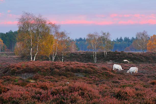 Autumn twilight. stock photo