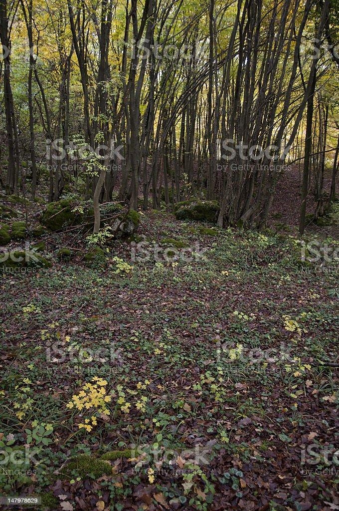 Autumn undergrowth royalty-free stock photo