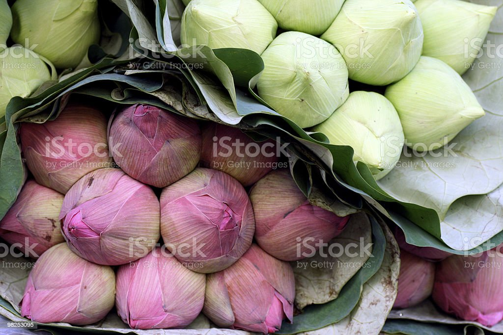 Autumn Vegetables royalty-free stock photo