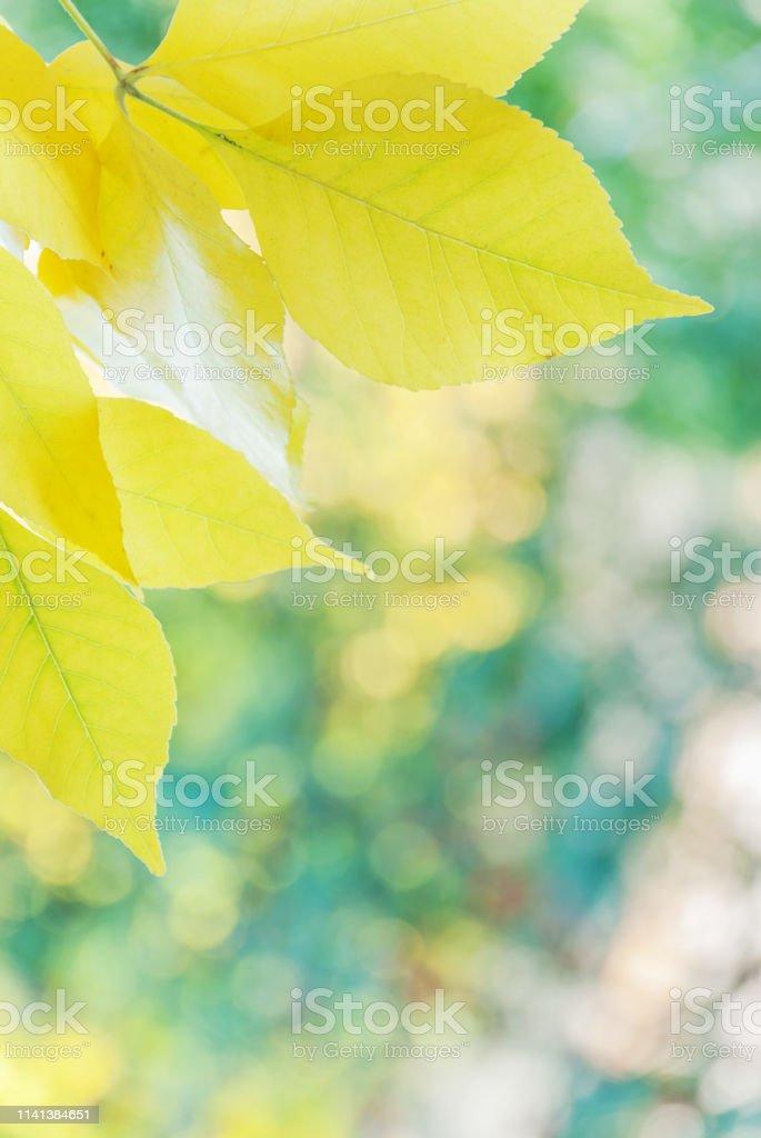 Autumn Vertical Wallpaper Stock Photo Download Image Now Istock