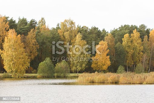 Small countryside view of pond near beuatiful autumnh forest with yellow leaves.