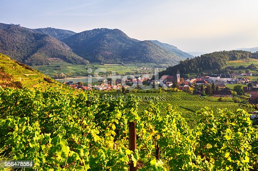 Vineyards near Spitz, Wachau valley, Austria