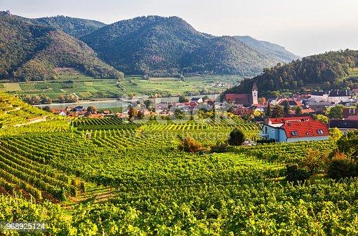 Vineyards near Spitz, Wachau valley, Austria