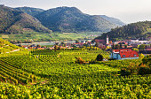 Autumn view of Vineyards around Spitz, Wachau valley, Austria