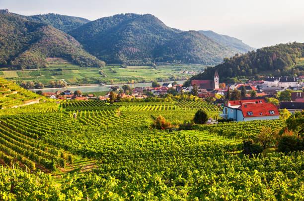 Herbstliche Aussicht auf Weinberge rund um Spitz, Wachau Tal, Österreich – Foto