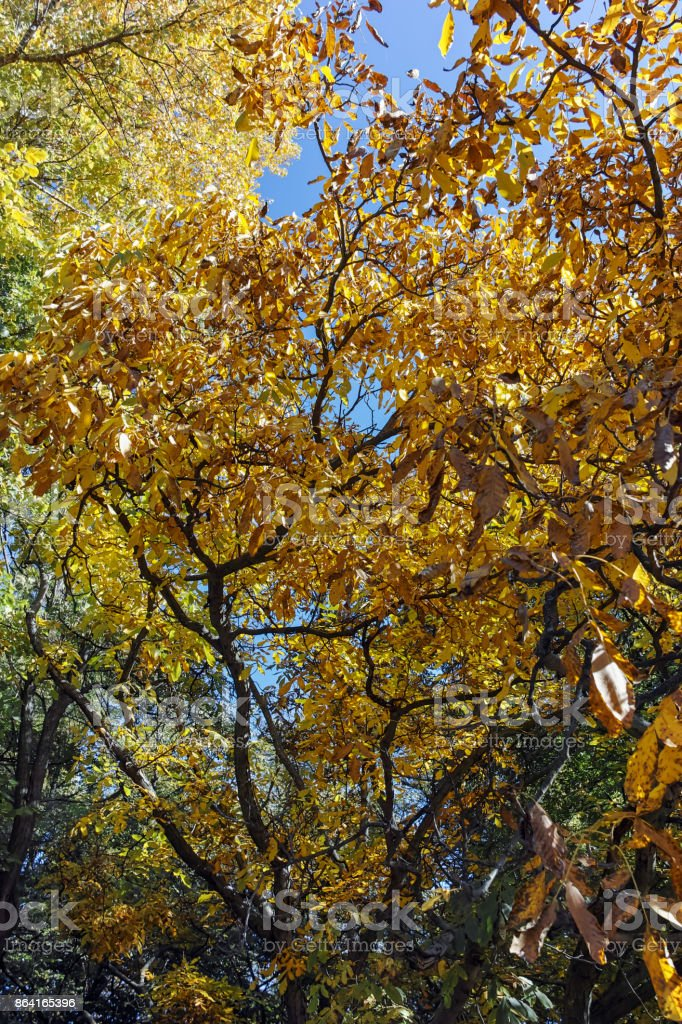 Autumn view with Yellow trees in South Park in city of Sofia royalty-free stock photo