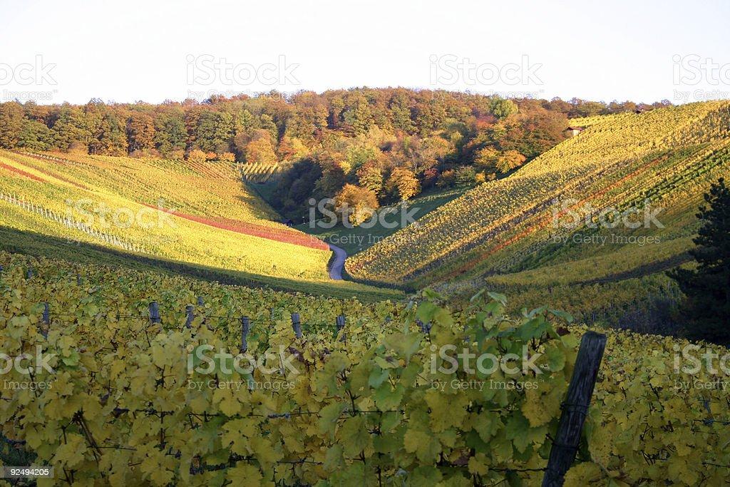 Autumn vineyard - valley royalty-free stock photo