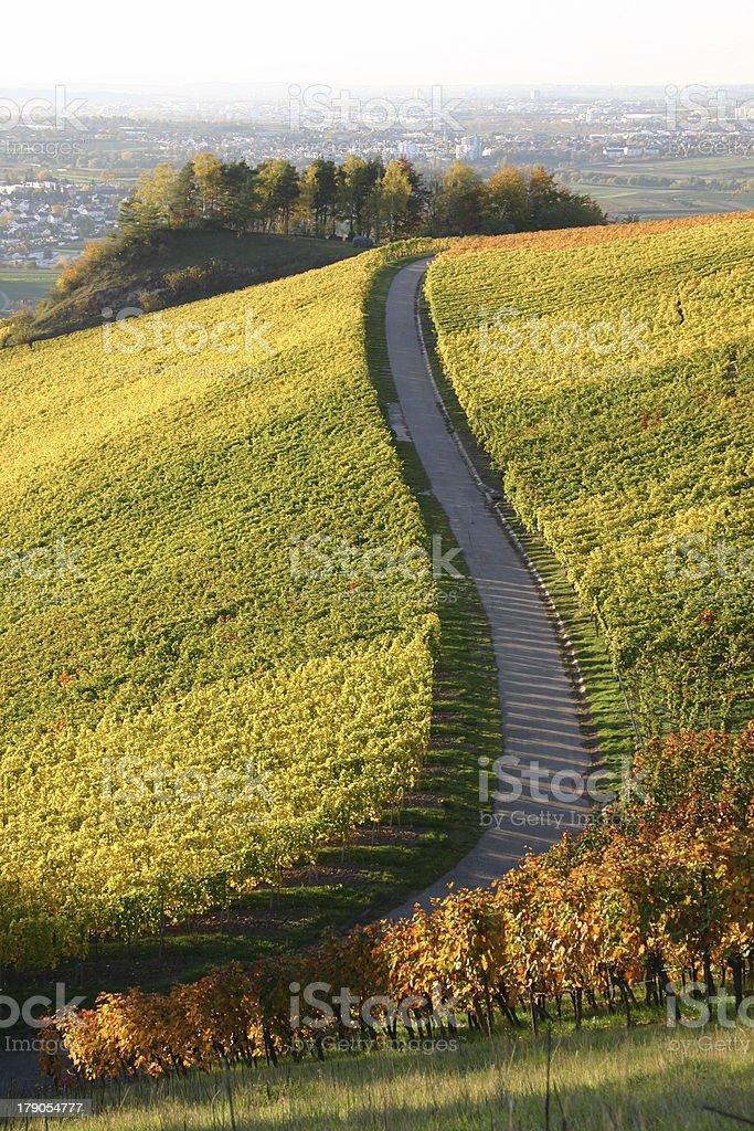 Autumn vineyard - winding path stock photo