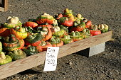 A stunning display of seasonal guards, pumpkins, corn and other autumnal decorations at the farm.
