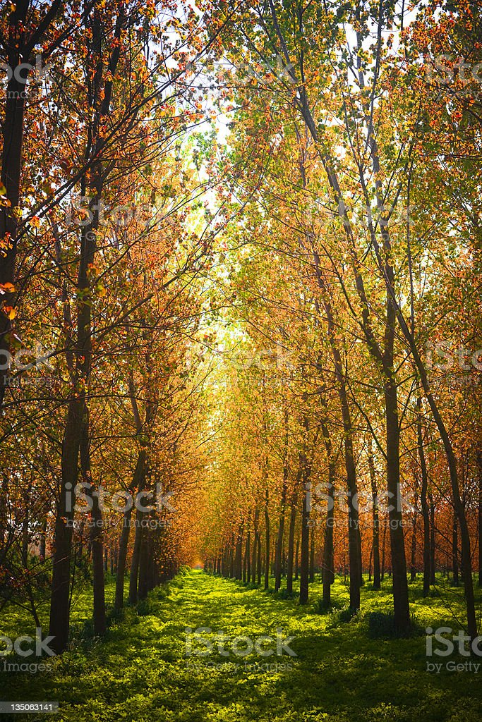 Autumn Vivid Colors Fairy Forest Tree Canopy royalty-free stock photo