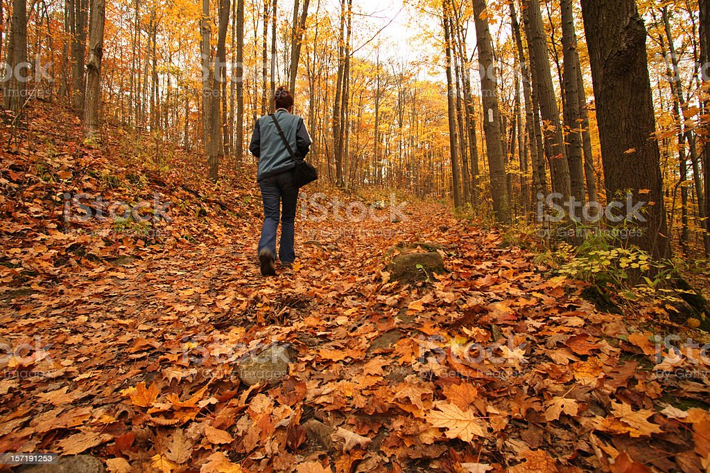 Autumn Walk in the woods royalty-free stock photo