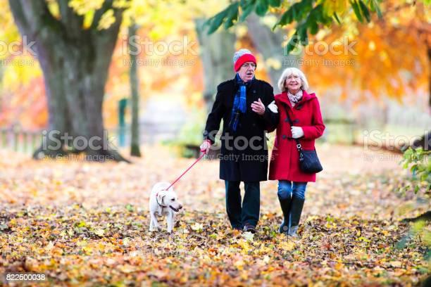 Autumn walk with the dog picture id822500038?b=1&k=6&m=822500038&s=612x612&h=kcvuuzkue3xtopcruit6isoxlnpplzqrpjrazwldla0=
