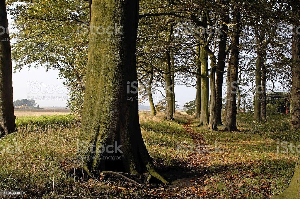 Autumn Walks 1 royalty-free stock photo