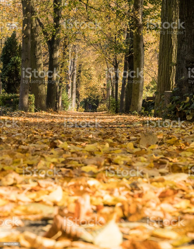 Autumn Walks royalty-free stock photo