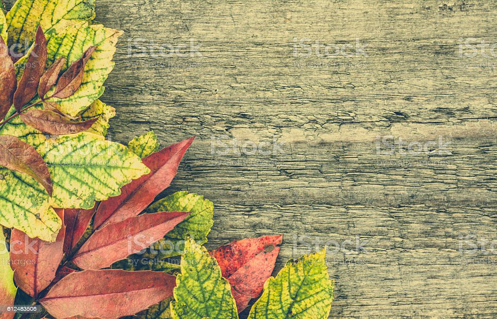 Autumn Wallpaper Fall Leaves Frame On Wooden Background Foto