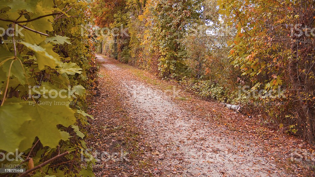 autumn way royalty-free stock photo