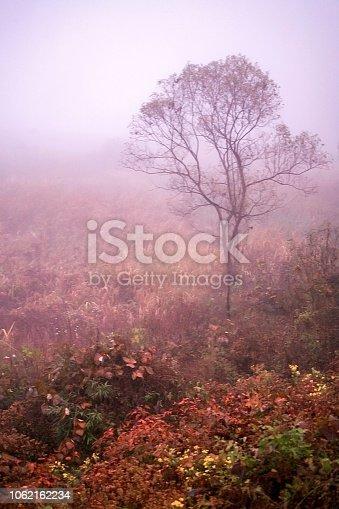 경안천의 아름다운 가을 풍경